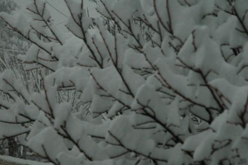 Marignane-sous-la-neige4.jpg