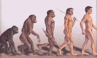 Evolution_homme